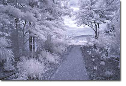digital infrared photography beautiful