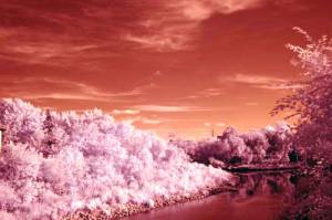 infrared image2