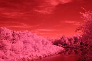 nikon d70 infrared image 1